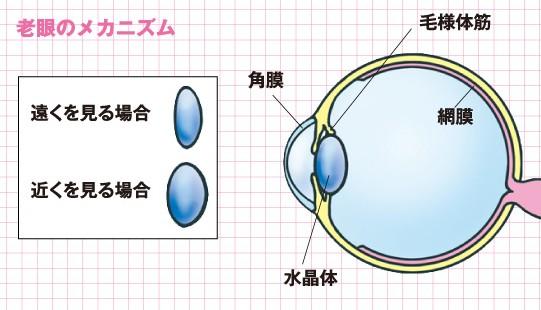 老眼のメカニズム